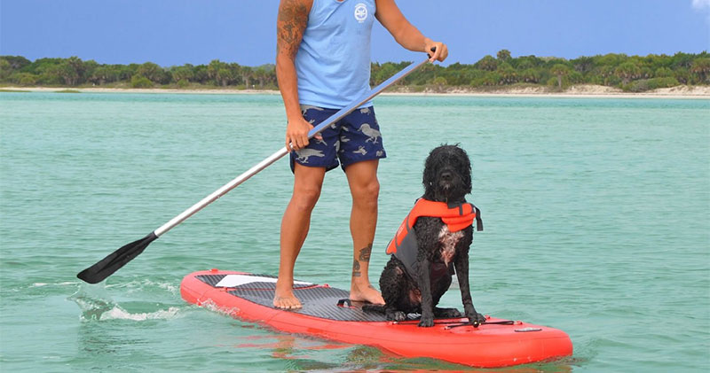Dog riding paddle board