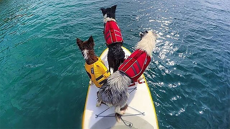 Get A Dog Life Jacket For Stand Up Paddle Boarding Pups